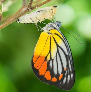 image Transform self-help into self-trust