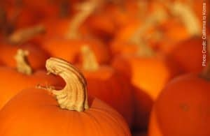 My favorite pumpkin recipe, registration ends for End Nighttime Overeating